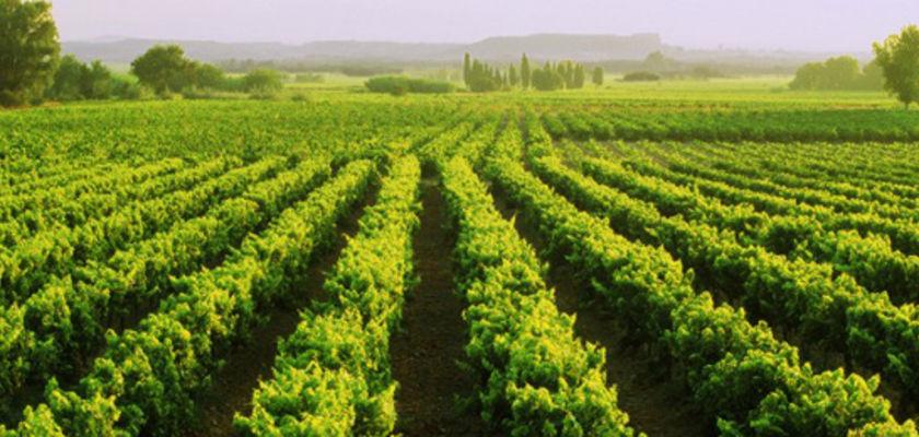 In vino veritas: pas toujours