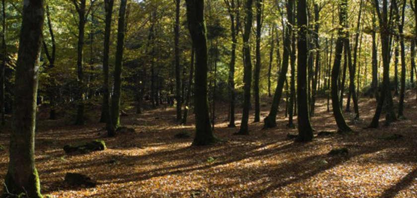Dans le Morvan, l'occupation s'organise dans un bois visé par un projet industriel