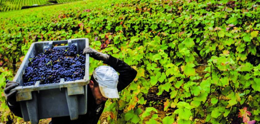 Pesticides : Du poison par arrêté préfectoral