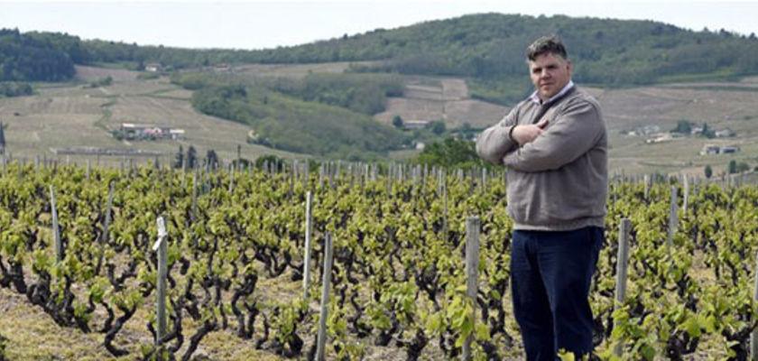 Un vigneron bio relaxé : il avait refusé d'utiliser un insecticide