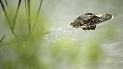 Des chercheurs canadiens annoncent le retour des palmiers et des crocodiles dans le Grand Nord