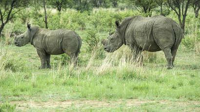 Le trafic des espèces sauvages rapporte des milliards d'euros