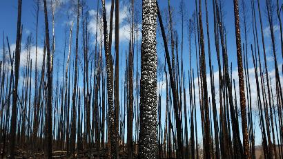Réchauffement : des milliards d'arbres menacés