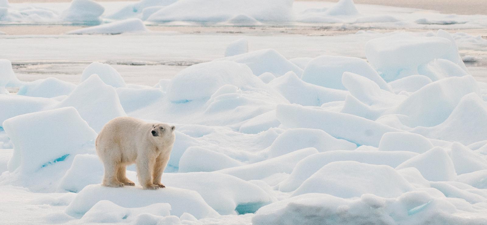 La CPI propose de considérer les atteintes à la nature comme des «crimes contre l'humanité»