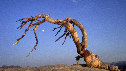 Réchauffement climatique : 100 millions d'arbres morts en Californie