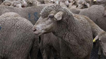 Véganisme : Animal politique