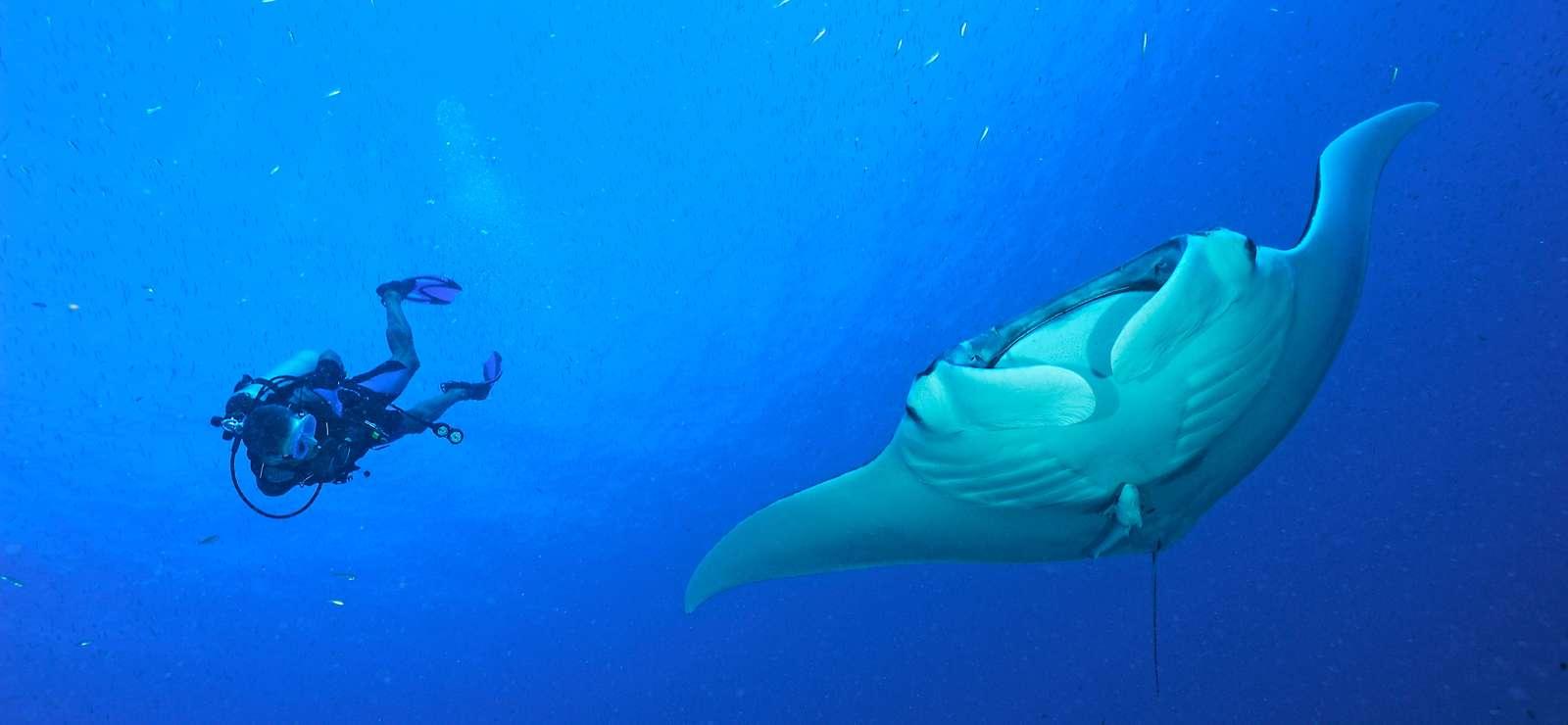 La biodiversité en péril à la conférence de Cancún