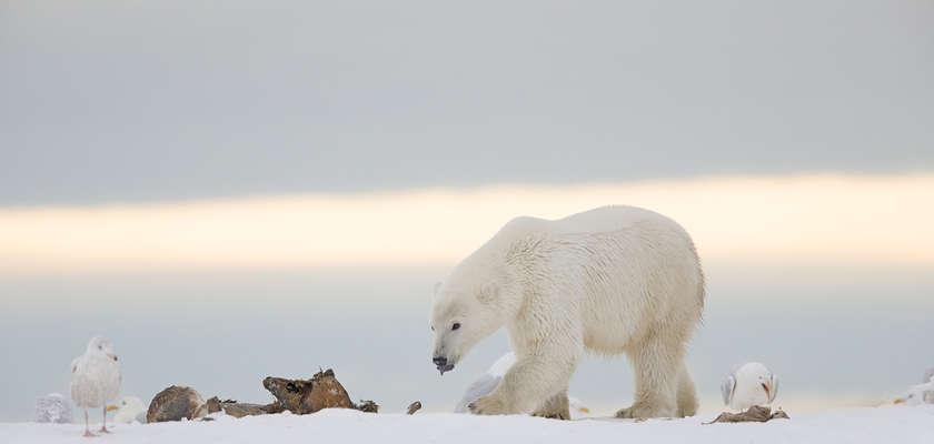 L'étonnante aventure d'une vétérinaire-détective en Alaska