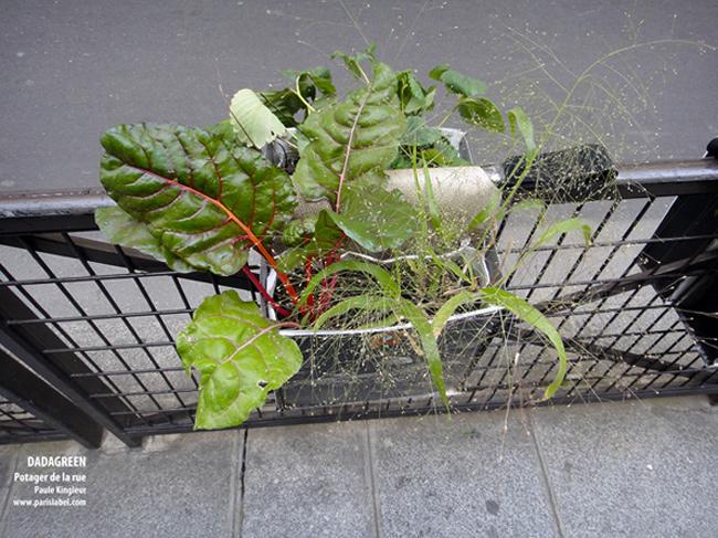 «Allez donc planter des choux, à la mode Dadagreen…» Opération Dadagreen sur les grilles de la rue des Blancs-Manteaux - Paule Kingleur