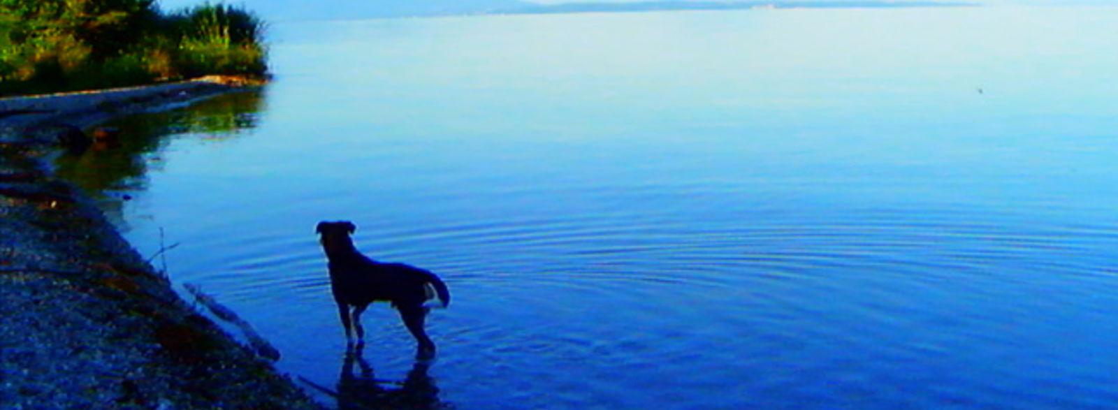 Cannes 2014 : «Adieu au langage»de Jean-Luc Godard ; «l'Institutrice» de Nadav Lapid